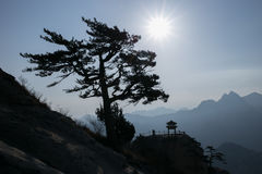The famous tourist attractions in Shaanxi province Chinese, Huashan mountain. The pine trees growing in Huashan, in different shapes, different images, very royalty free stock photo