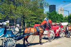 Beautiful Horses and Carriages in Central Park in New York City. New York City/USA stock photos