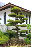 A famous traditional Japanese garden Royalty Free Stock Photo