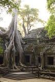 Famous tree at Angkor Wat temple Stock Photos