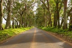 Famous Tree Tunnel of Eucalyptus trees. Famous mile long tunnel of Eucalyptus trees along Maluhia Road to Koloa Town, Kauai Hawaii Stock Image