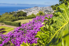 Famous Tropical Botanical Gardens in Funchal town, Madeira islan Royalty Free Stock Images
