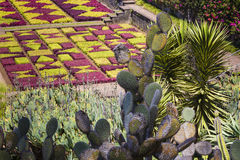 Famous Tropical Botanical Gardens in Funchal town, Madeira islan Royalty Free Stock Image