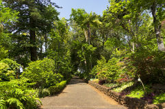 Famous Tropical Botanical Gardens in Funchal Stock Images