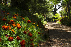 Famous Tropical Botanical Gardens in Funchal Stock Photography
