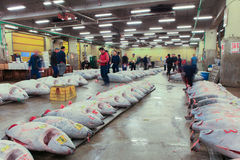 Famous Tuna auction at Tsukiji fish market Royalty Free Stock Photos