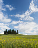 Famous Tuscan cypress trees Stock Image