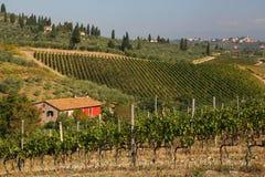 Famous Tuscany vineyards  in Italy Stock Photos
