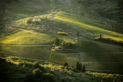 Famous Tuscany vineyards  in Italy Stock Images