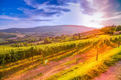 Tuscany vineyards royalty free stock photography