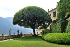 The famous Umbrella tree. In the garden of Villa del Balbianello - Lenno, Tremezzina, Como, Lombardy, Italy stock images