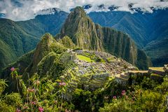Famous view of Machu Picchu city in pink flowers, Peru. The best vacation, monument of latin america, symbol of inca empire, travel around the world, seven royalty free stock photography