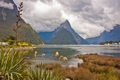 Famous view of Milford Sound from harbor of the fjord, New Zealand. Lonely planet best trek of New Zealand, world backpacking, dramatic scenery of zealandia stock images