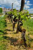 Famous vineyards of the Chateau de Monbazillac royalty free stock photos