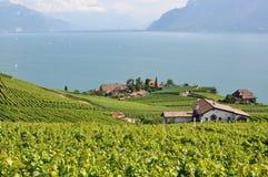 Famous vineyards in Lavaux against Geneva lake. Switzerla Royalty Free Stock Images