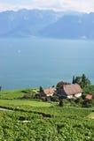Famous vineyards in Lavaux region, Switzerla stock photos