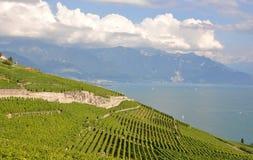 Famous vineyards in Lavaux region, Switzerla Royalty Free Stock Photo