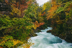 The famous Vintgar gorge Canyon, Bled,Triglav,Slovenia,Europe Stock Image