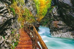The famous Vintgar gorge Canyon with wooden pats Stock Image