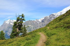 View from hiking path in the Swiss alps on the high mountains. View at the Wetterhorn and Eiger from hiking path in the Swiss alps. From Maennlichen to stock image