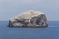 Lighthouse on the Bass Rock, Scotland. The famous white lighthouse perched on the Bass Rock, Scotland Royalty Free Stock Photography