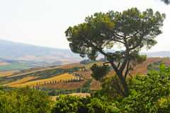 Famous winding road in Val d'Orcia Royalty Free Stock Image
