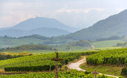 Famous wine route in Alsace - France Stock Photos