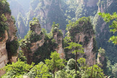 Famous Zhangjiajie National Forest Park in Hunan Province, China. China. Famous Zhangjiajie National Forest Park in Hunan Province Stock Photography