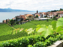 Free Famouse Vineyards In Lavaux Stock Photos - 10961943