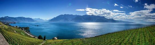 Famousewijngaarden in Montreux tegen het meer van Genève Stock Fotografie