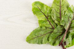 Fresh raw Beetroot isolated on grey wood. Fan of beet greens flatlay isolated on grey wood background top view fresh young leaves Royalty Free Stock Photography