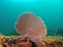 Fan Coral. This fan coral was taken about 15 feet in South Florida Stock Photography