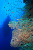 Fan coral and Dive Boat Royalty Free Stock Photos