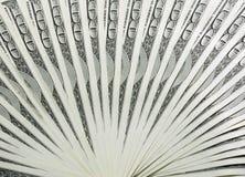 Fan de los billetes de banco del dólar Foto de archivo