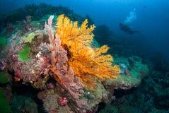 Fan de mer dans Andaman du nord, Thaïlande photo stock