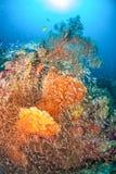 Fan de mer dans Andaman du nord, Thaïlande image libre de droits