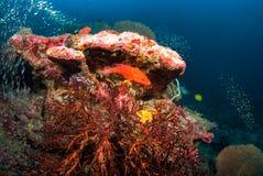 Fan de mer dans Andaman du nord, Thaïlande image stock