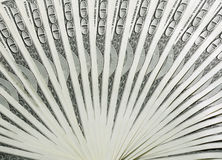 Fan of dollar banknotes Stock Photo