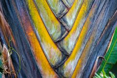 fan drzewka palmowego wzór Obrazy Stock