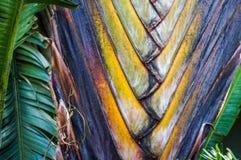 fan drzewka palmowego wzór Zdjęcie Royalty Free
