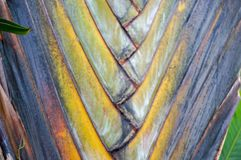 fan drzewka palmowego wzór Fotografia Stock
