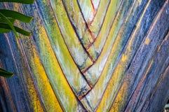 fan drzewka palmowego wzór Zdjęcie Stock
