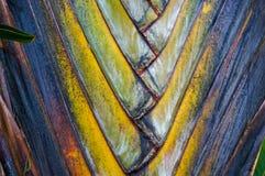 fan drzewka palmowego wzór Fotografia Royalty Free