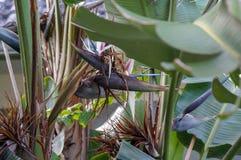 fan drzewka palmowego wzór Zdjęcia Royalty Free