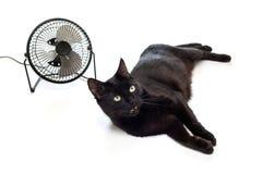 Fan et chat noir Photos libres de droits