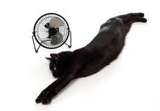 Fan et chat noir Images libres de droits