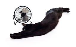 Fan et chat noir Images stock