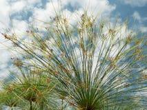 Fan formade växter Arkivbilder
