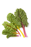 Fan of fresh chard leaves Stock Photography