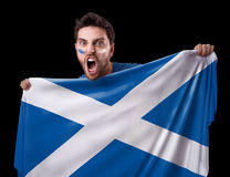 Fan holding the flag of Scotland Stock Images
